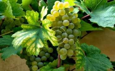 Франция и френските вина