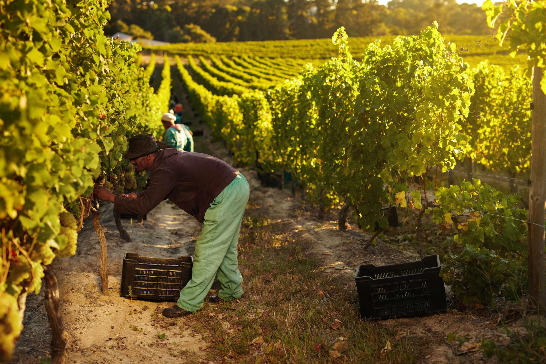 Долината на виното
